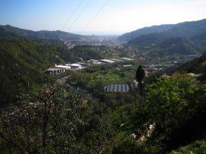 CentroBambù Italia